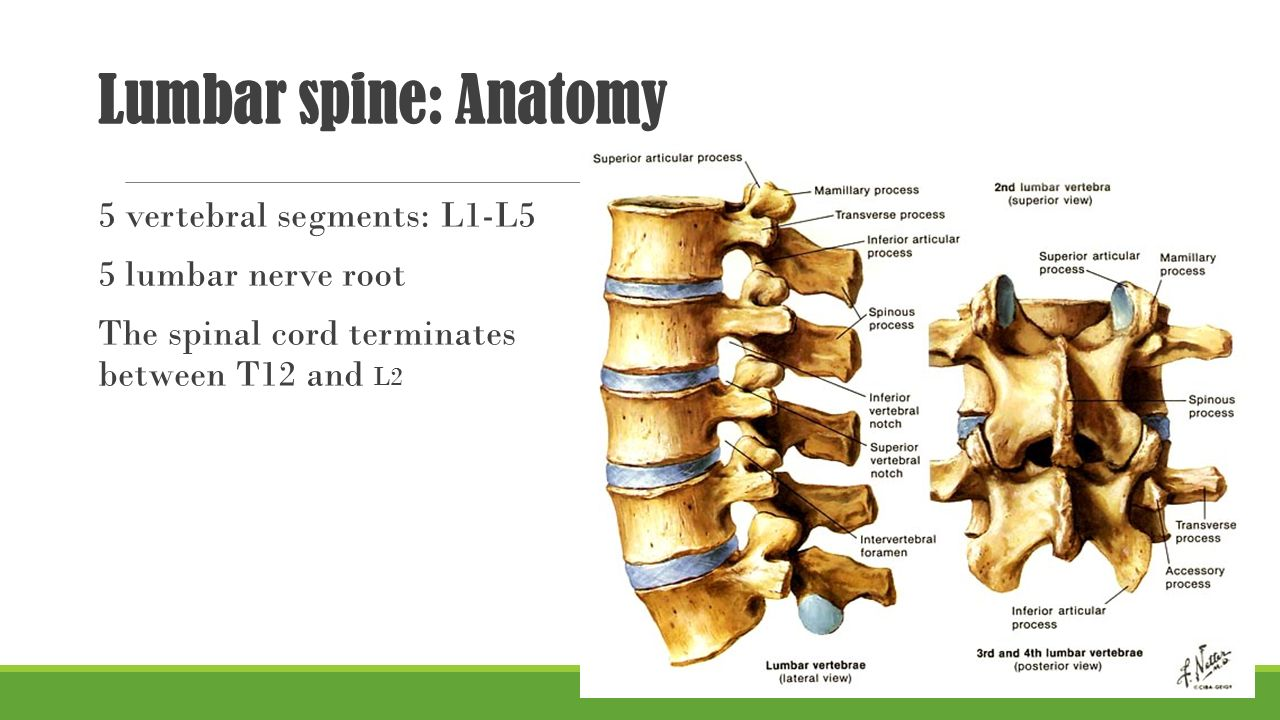 degenerative disease of lumbar spine ppt video online