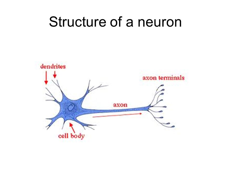 Neuron diagram synapse nervous system ppt video online download ccuart Gallery