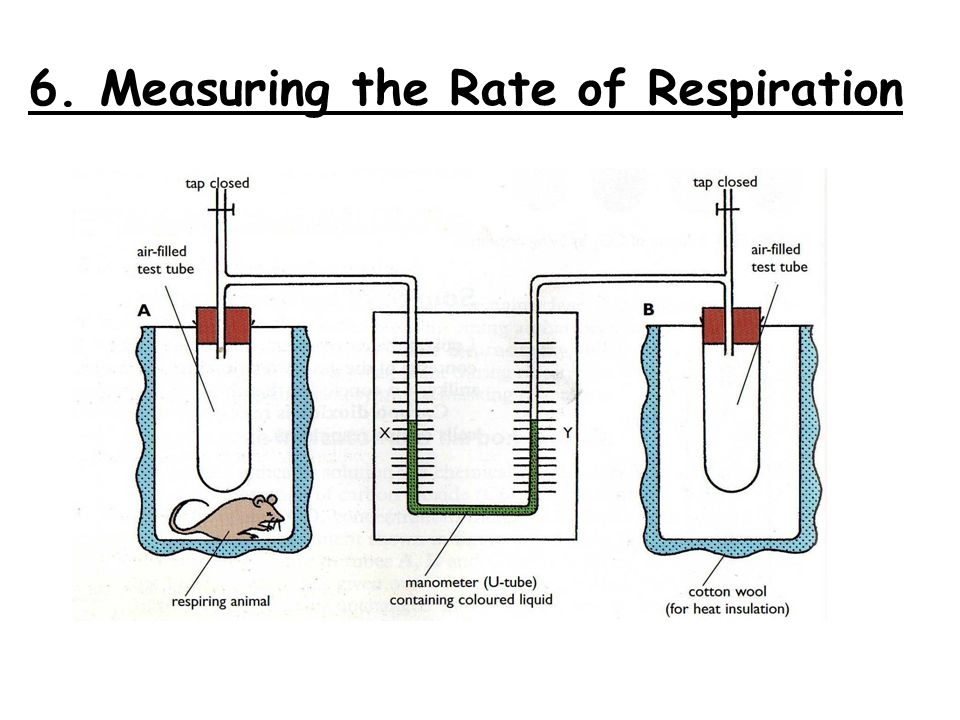 rate of respiration of yeast Free essay: rate of respiration in yeast aim: i am going to investigate the rate of  respiration of yeast cells in the presence of two different sugar.