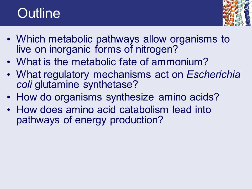 metabolism outline