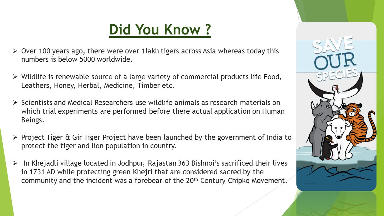 Did You Know Over 100 years ago, there were over 1lakh tigers across Asia whereas today this numbers is below 5000 worldwide.