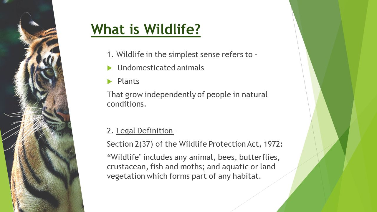 What is Wildlife 1. Wildlife in the simplest sense refers to –