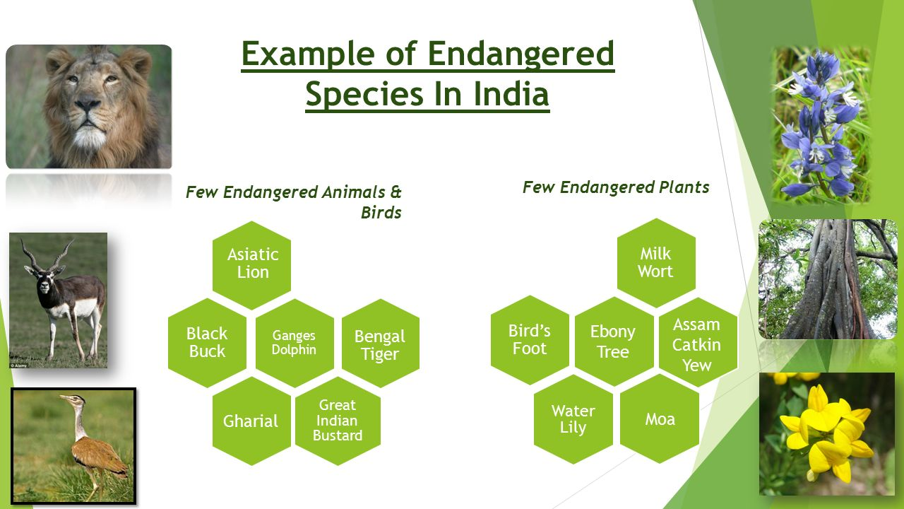 Example of Endangered Species In India