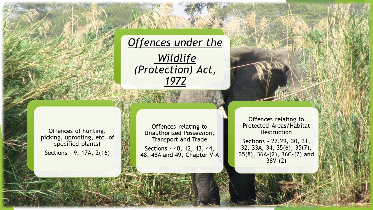 Wildlife (Protection) Act, 1972