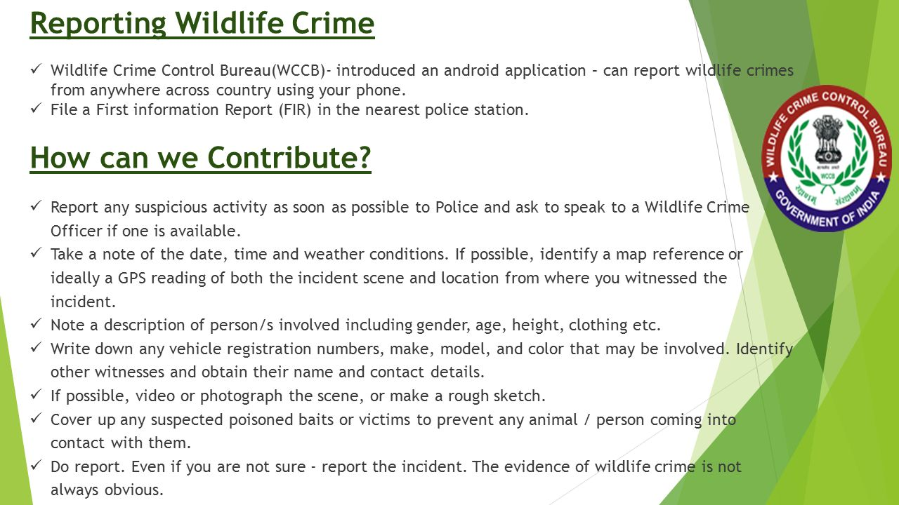 Reporting Wildlife Crime