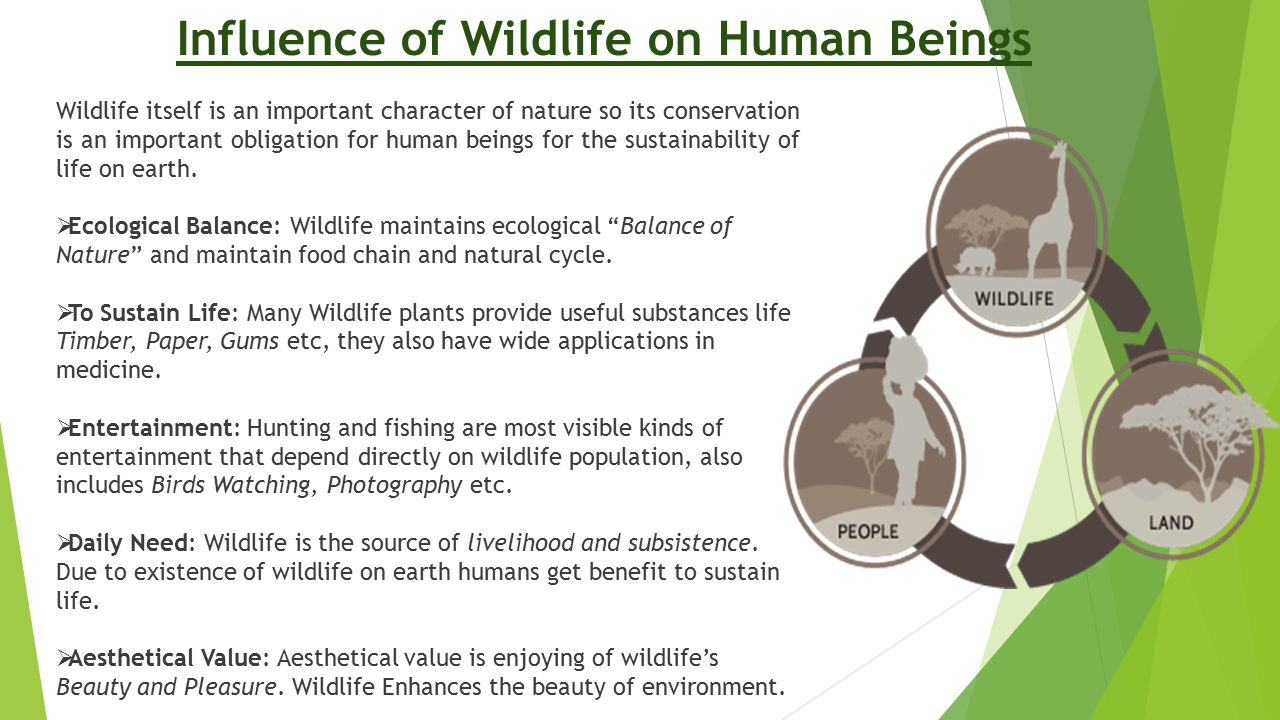 Influence of Wildlife on Human Beings