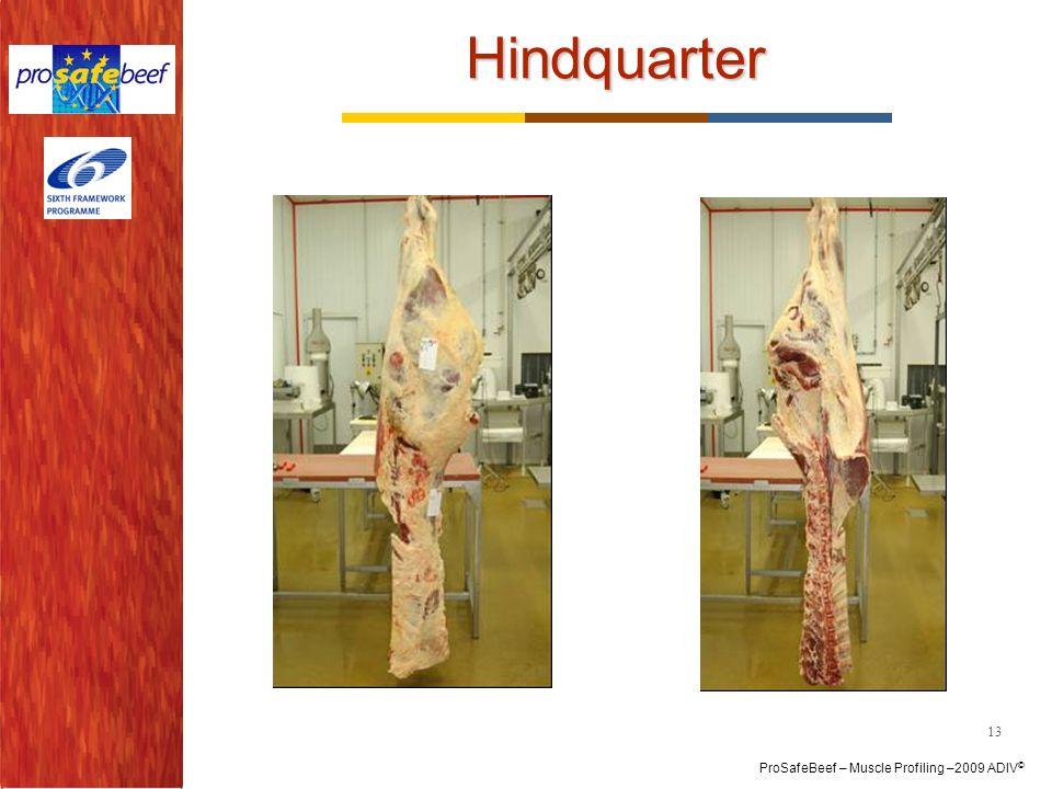 Hindquarter 13