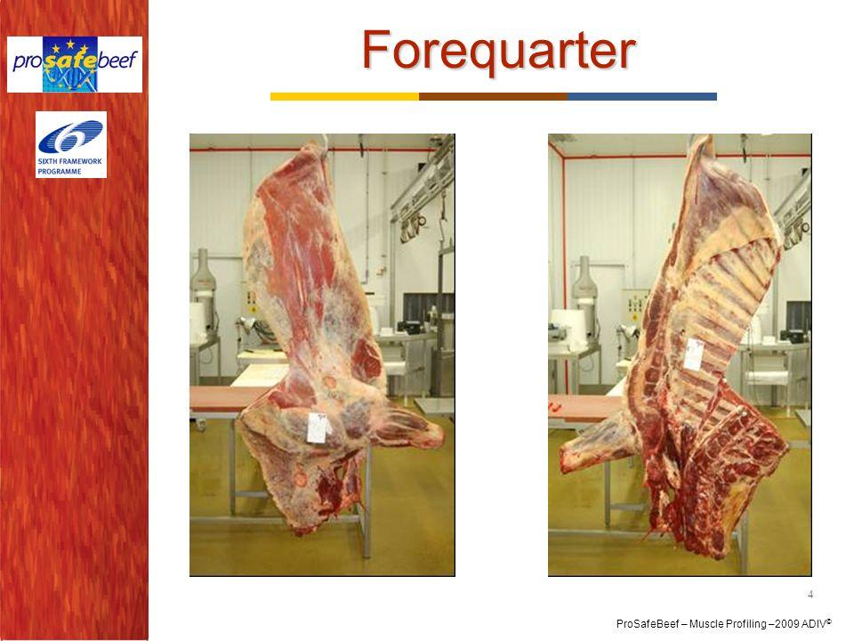 Forequarter 4