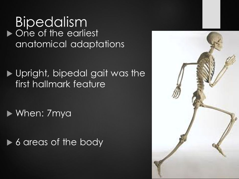 a history of bipedalism in humans Rather than harp on why bipedal humans are so unusual, stanford,  is the  fallacy of reading any linear progression into the story of why certain bipeds, our .