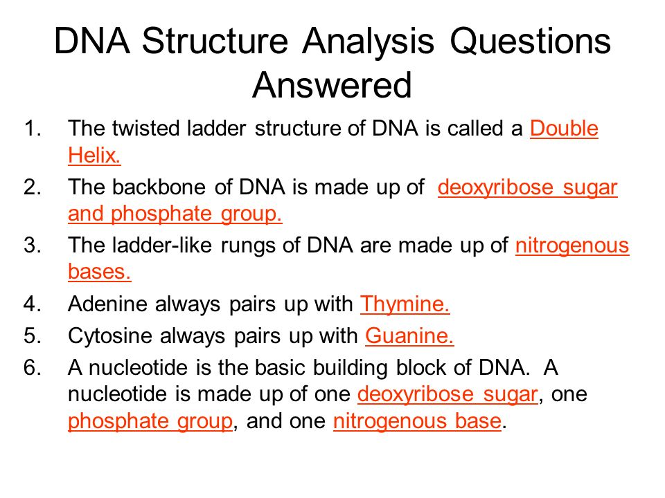 DNA Structure Analysis Questions Answered