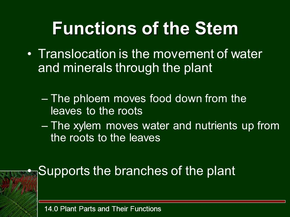 The functions of water and minerals
