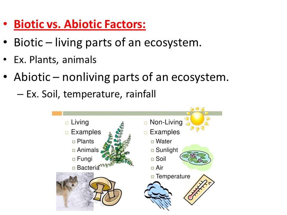Unit 8 ecology ppt download for Four main components of soil