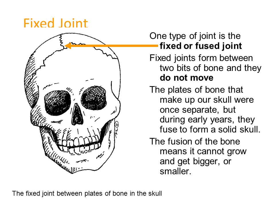 Ball and Socket Joint One type of joint is the ball and ...