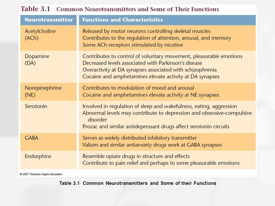 Chapter 3: The Biological Bases of Behavior - ppt download