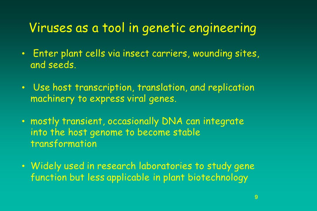 Essay questions on genetic engineering