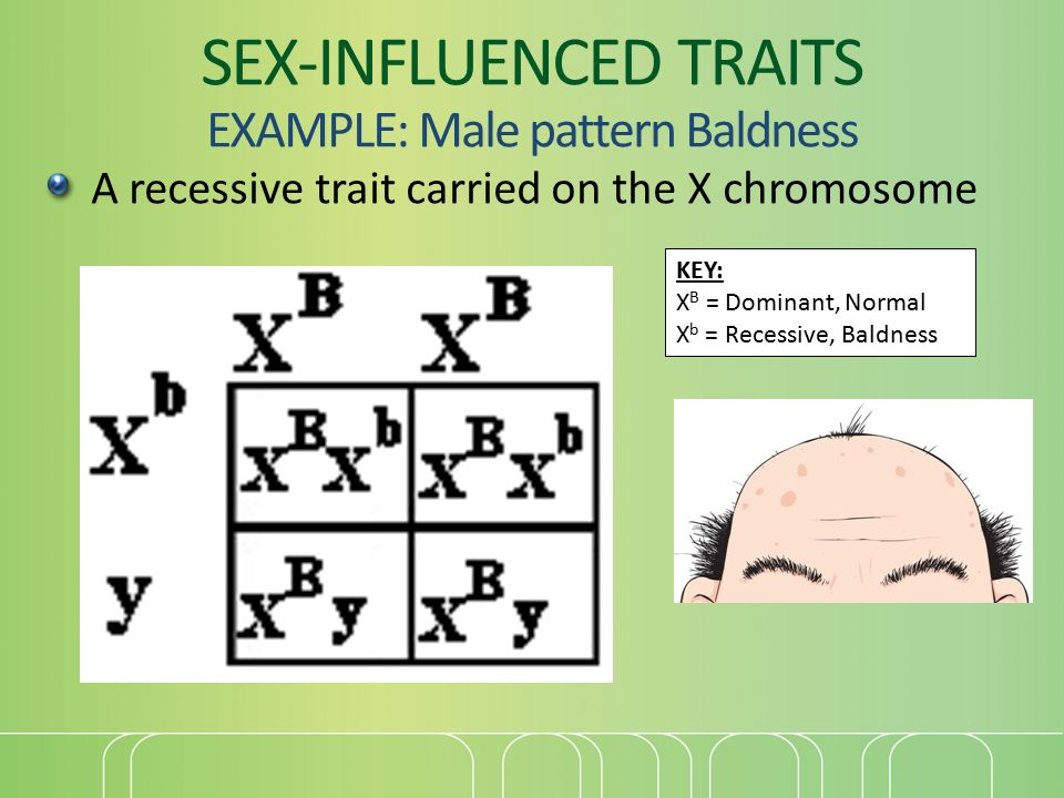 Sex influenced traits in sheep