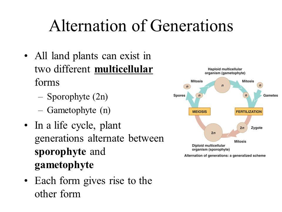Plant Reproduction AP Biology Unit ppt download