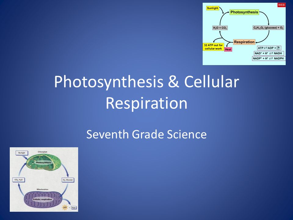 science photosythesis Photosynthesis is a vital process among photoautotrophs, like plants, algae and some bacteria that are able to create their own food directly from inorganic compounds.