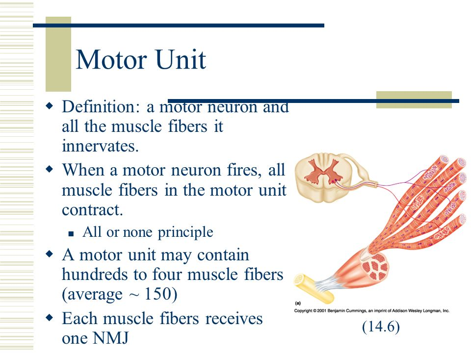 Innervation definition anatomy 1883672 - follow4more.info