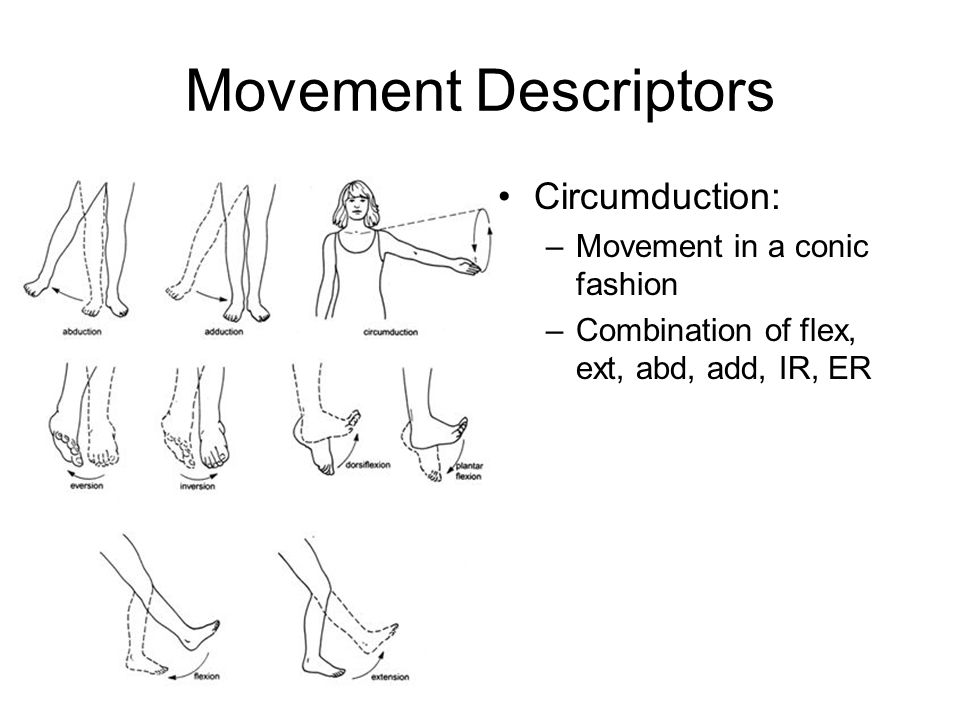 Directional And Anatomical Location Terminology Ppt Video Online
