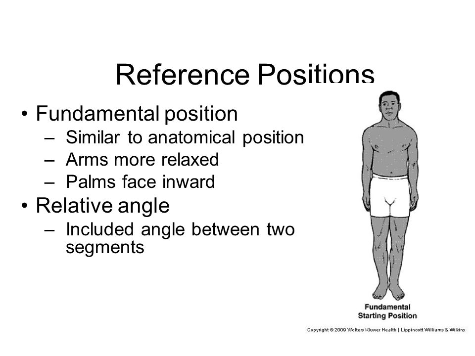 Relative Position Anatomy
