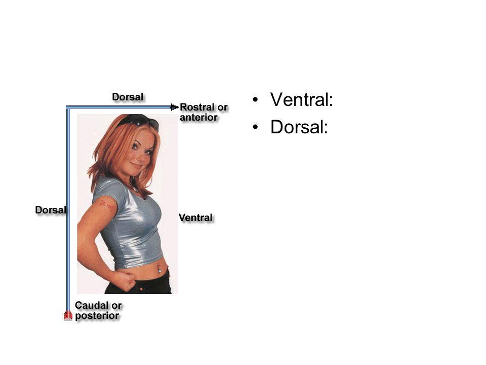Coronal Transverse Midsagittal Plane Creativehobbyore