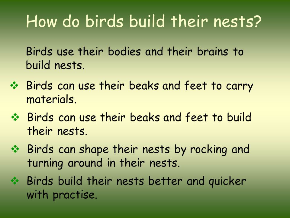 Types of Bird Nests - The Spruce