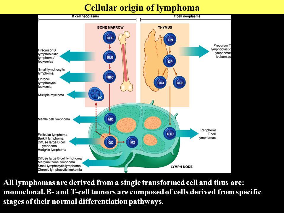 cellular and molecular origins of albinism