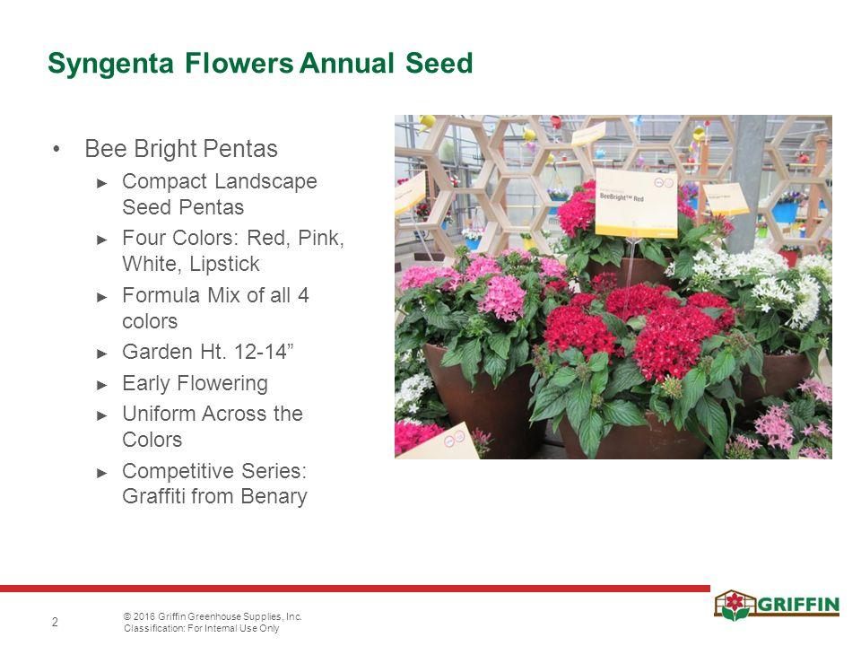 2 Syngenta Flowers Annual Seed