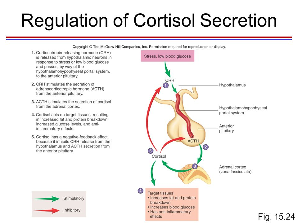 hormonal regulation of stress Stress causes the body to release the hormone cortisol, which is produced by the adrenal glands cortisol is important to blood pressure regulation and the normal functioning of several body systems including cardiovascular, circulatory and male reproduction.
