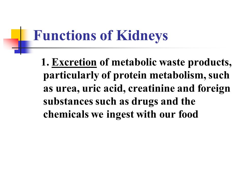 an analysis of the topic of the excretion of wastes by renal system Renal physiology (latin rēnēs, kidneys)  and the secretion of wastes from the blood into the urine  although the strictest sense of the word excretion with respect to the urinary.