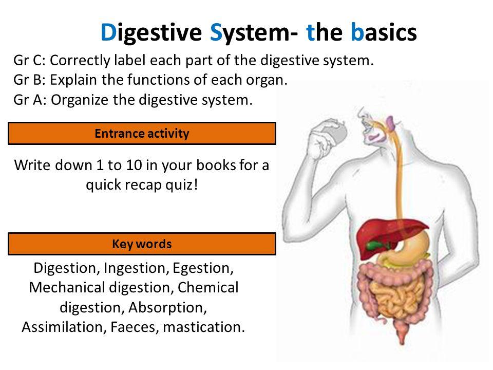 Digestive System- the basics - ppt video online download