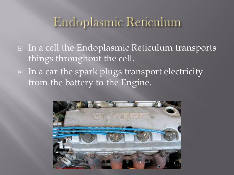 endoplasmic reticulum analogy Cell Organelle Analogies - ppt download