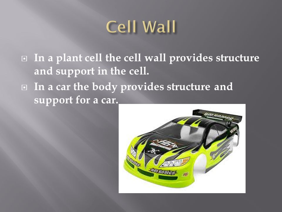 plant cell wall structure pdf