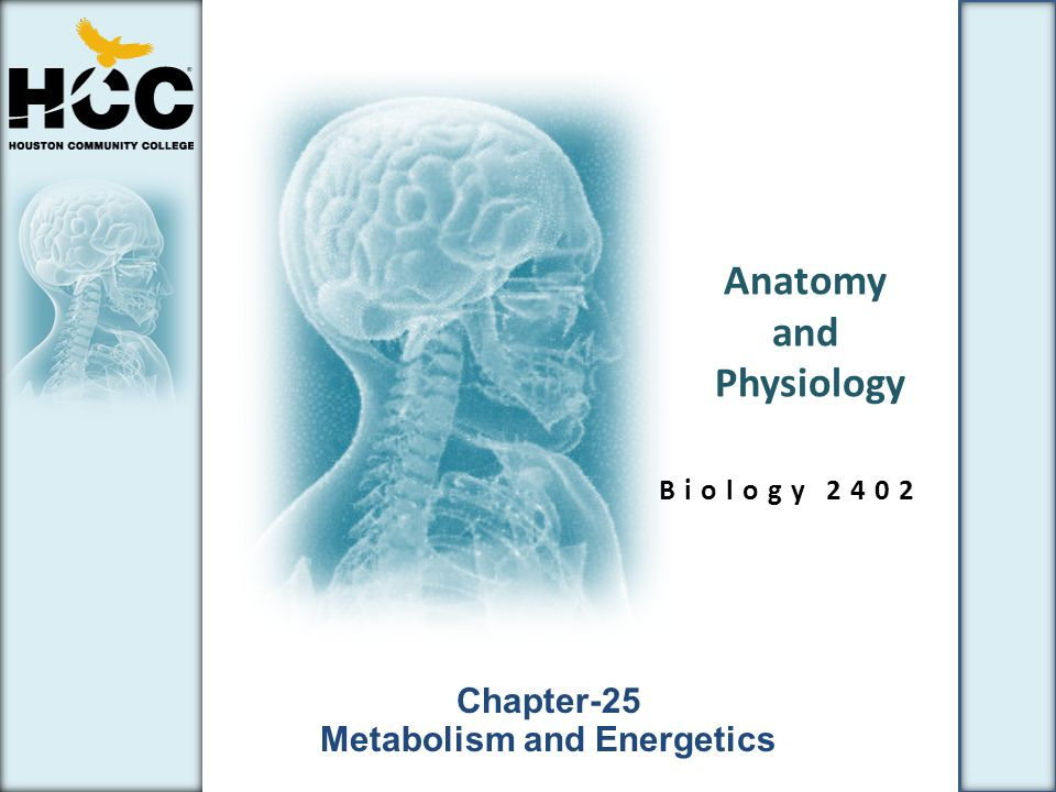 Anatomy and Physiology Online and Educational Resources 1480973 ...
