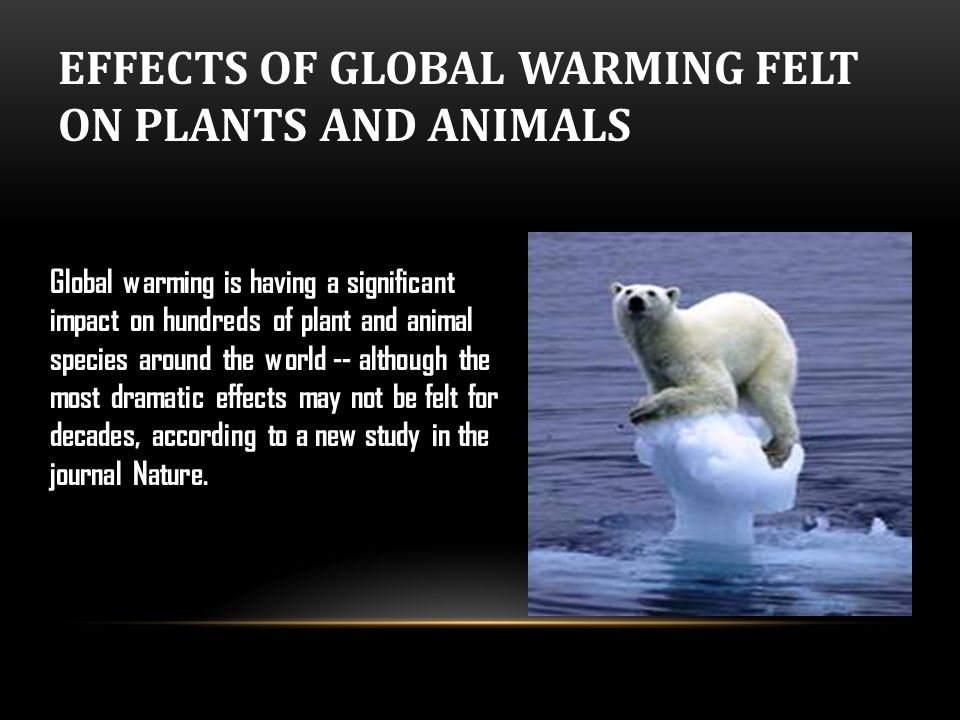 global warming effects on animals essay The predicted effects of global warming are many and to lead to increasing precipitation but the effects on storms are is one of largest animals ever.