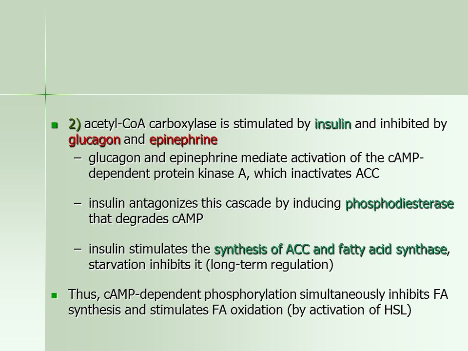 2) acetyl-CoA carboxylase is stimulated by insulin and inhibited by glucagon and epinephrine