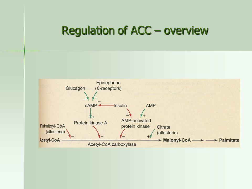 Regulation of ACC – overview