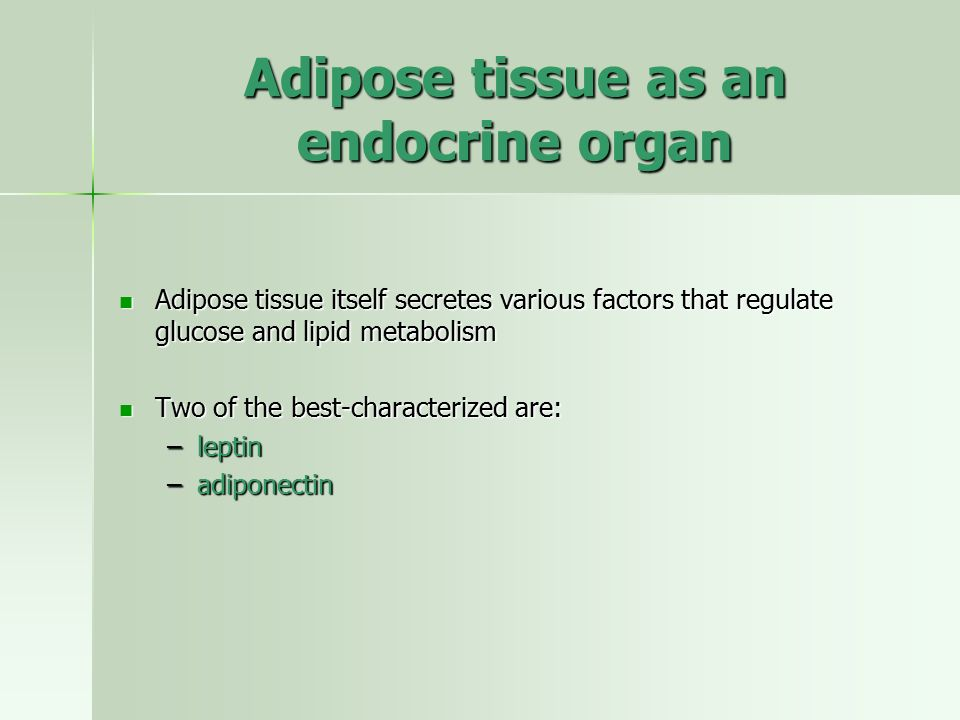 Adipose tissue as an endocrine organ