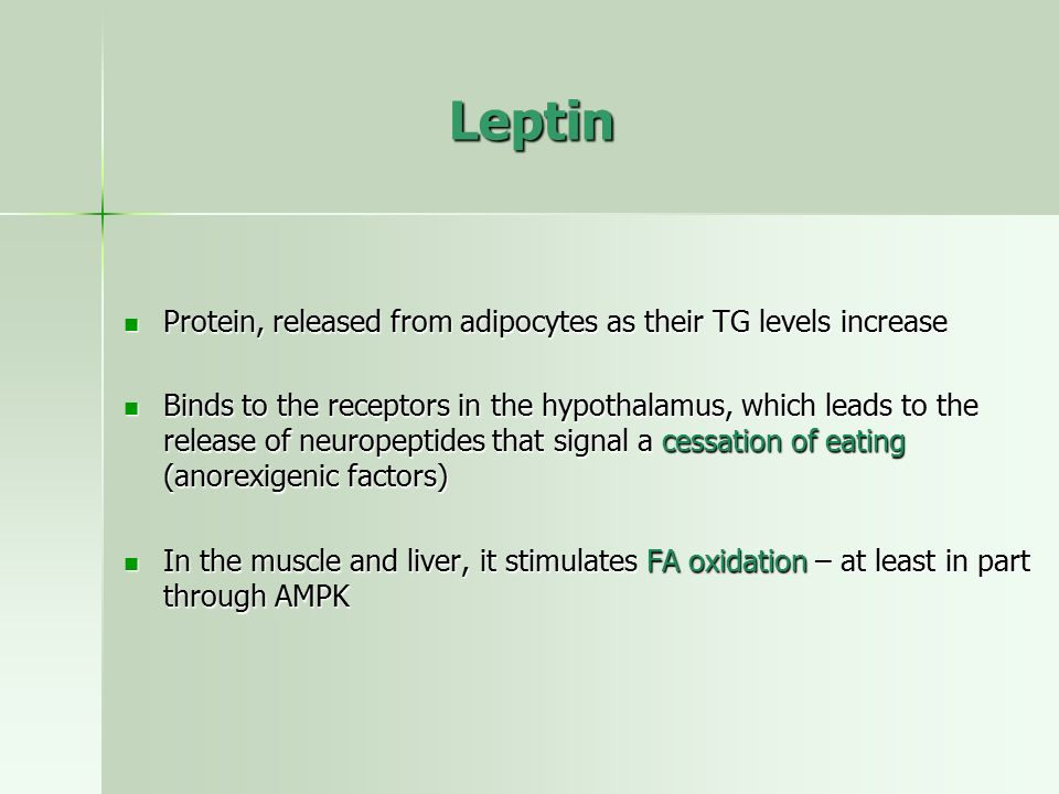 Leptin Protein, released from adipocytes as their TG levels increase