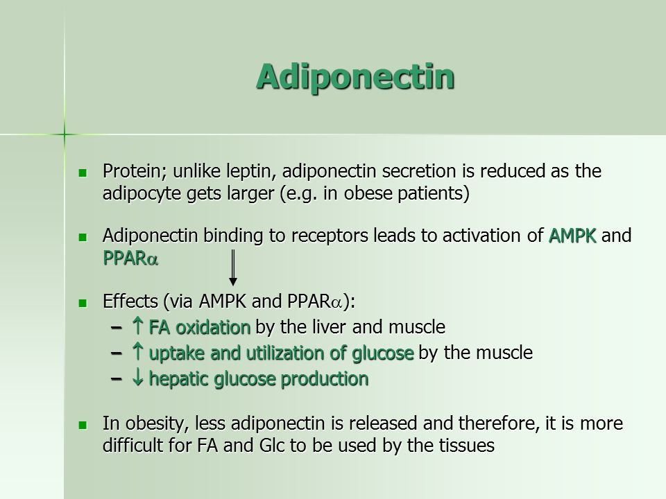 Adiponectin Protein; unlike leptin, adiponectin secretion is reduced as the adipocyte gets larger (e.g. in obese patients)