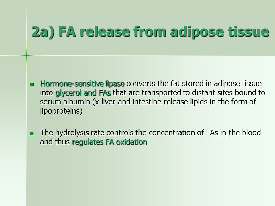 2a) FA release from adipose tissue