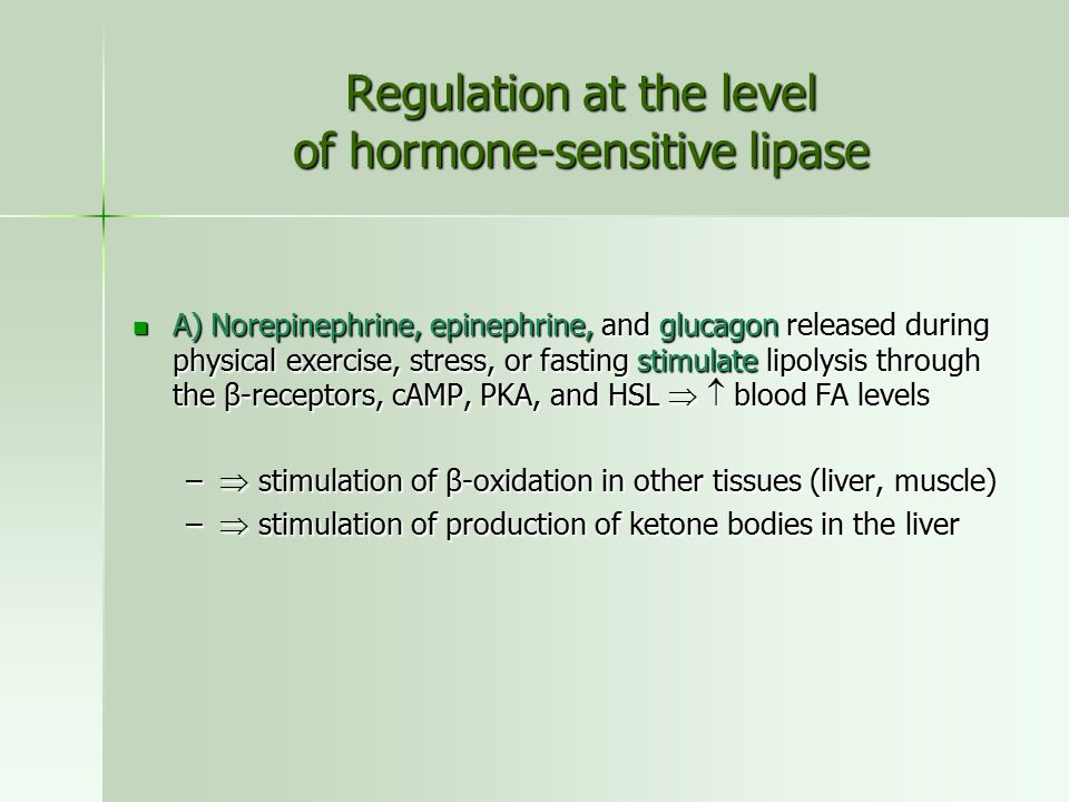 Regulation at the level of hormone-sensitive lipase