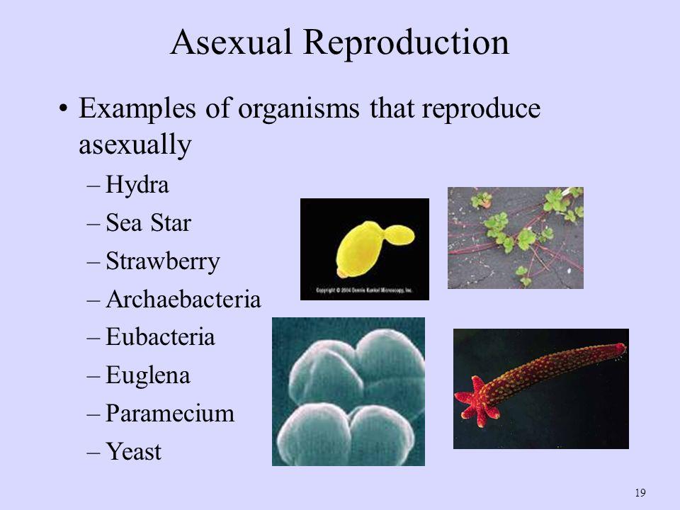 archaebacteria examples