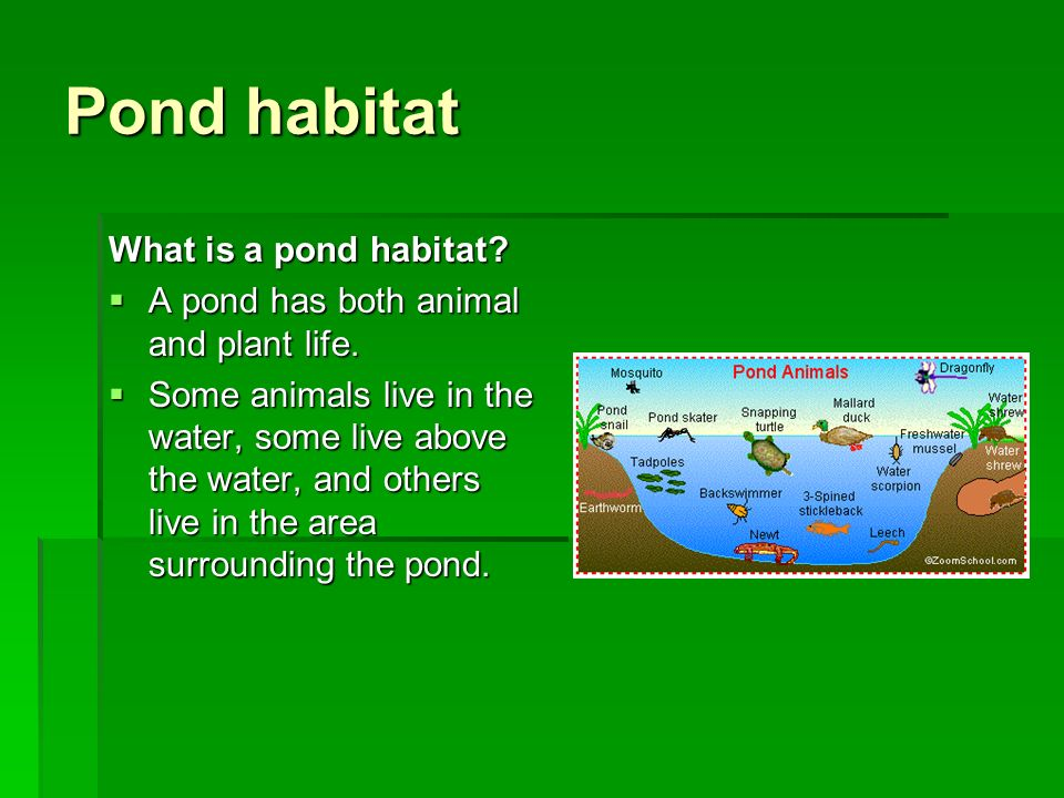 Habitats ppt video online download for Plants that live in a pond