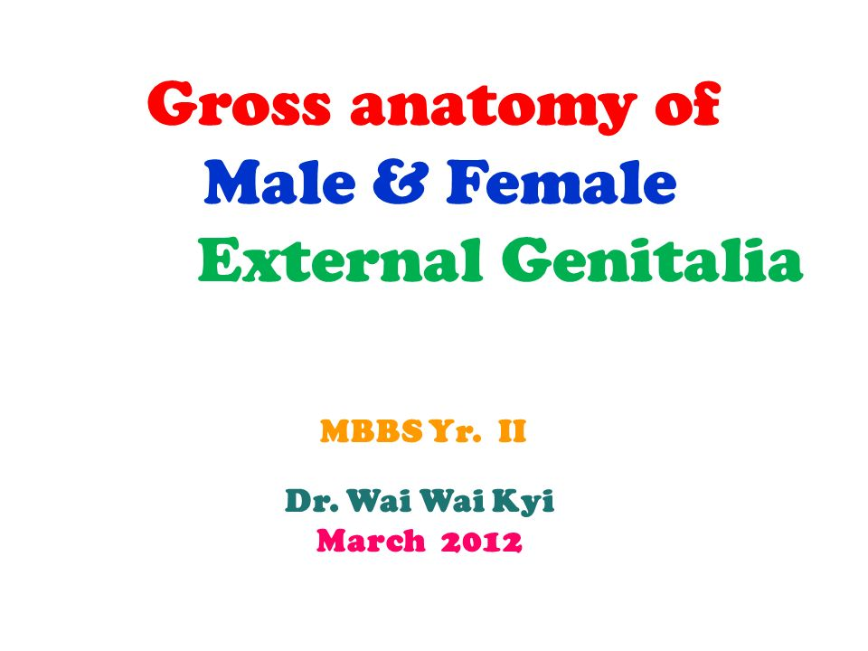 Gross anatomy of Male & Female External Genitalia MBBS Yr. II - ppt ...