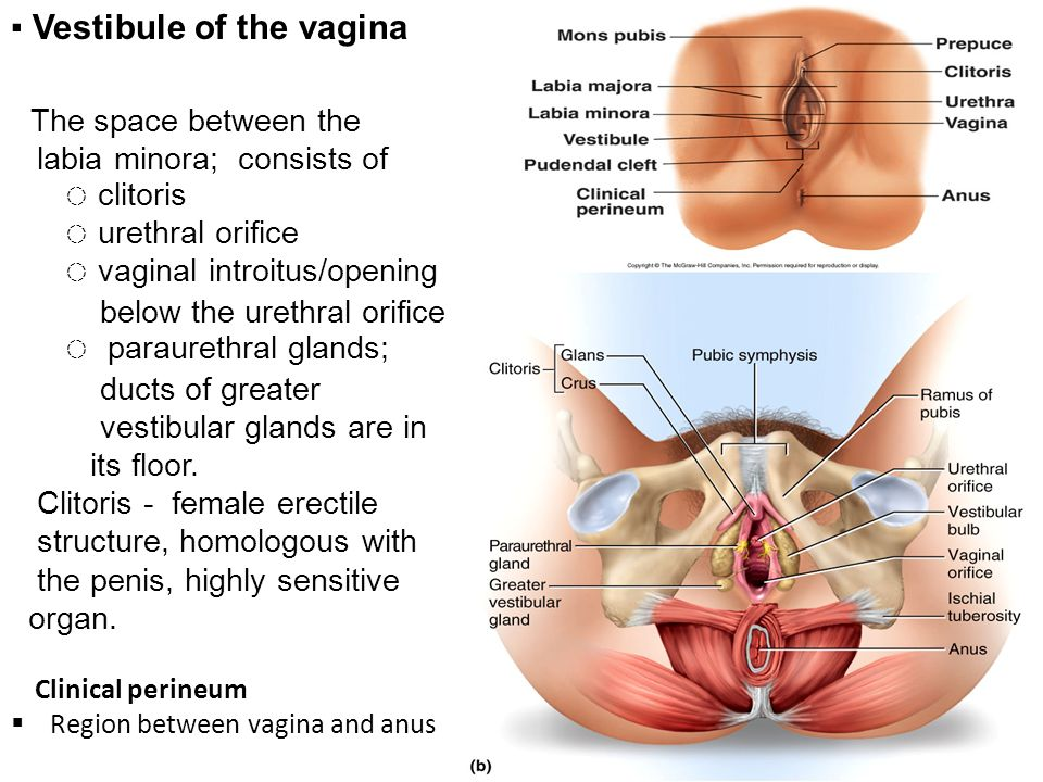 Anatomy female vagina idea has