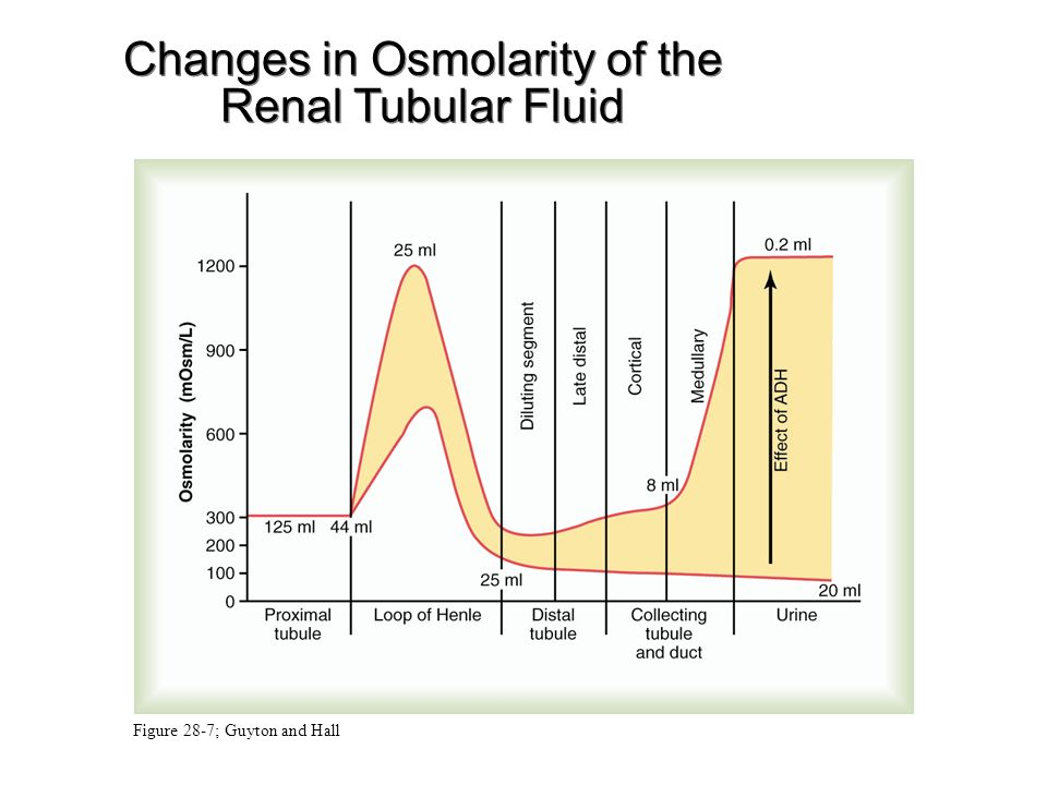 renal regulation of blood osmolarity • long-term blood pressure regulation involves renal regulation of blood volume via the  • increased blood osmolarity stimulates release of antidiuretic.