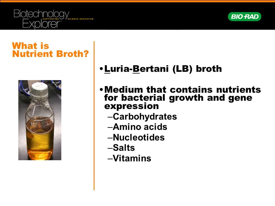 luria bertani broth