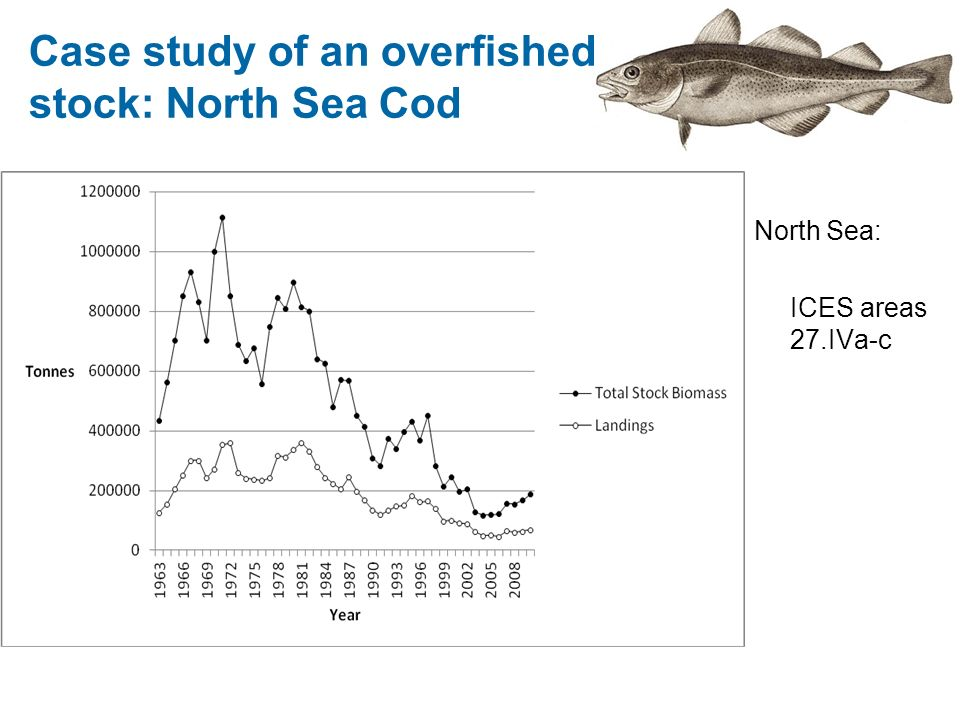Case study of an overfished stock: North Sea Cod